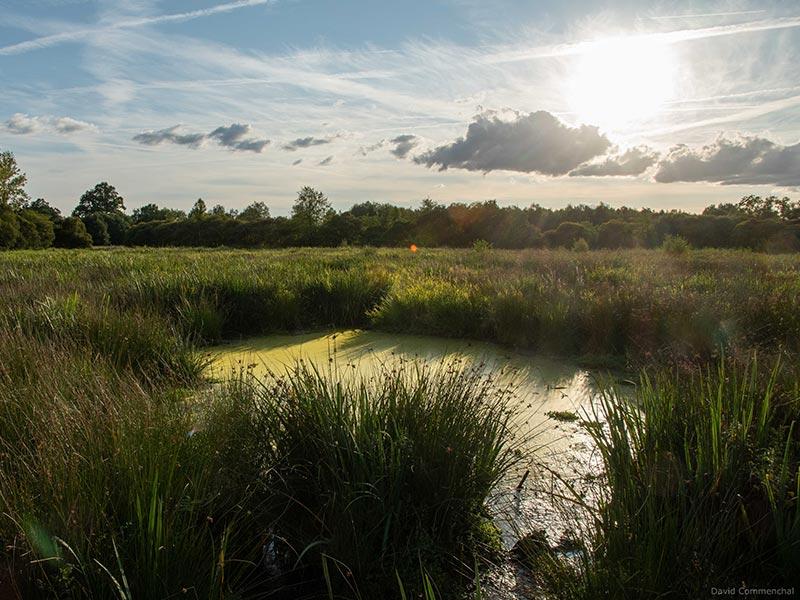 Marais du Grand Hazé au coucher du soleil