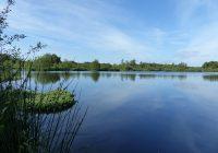 Marais du Grand Hazé (1)