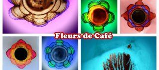 exposition Noël Lefebvre «Fleurs de Café»