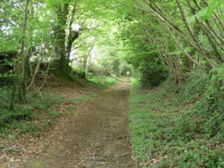 lonlay-le-tesson-massif-forestier