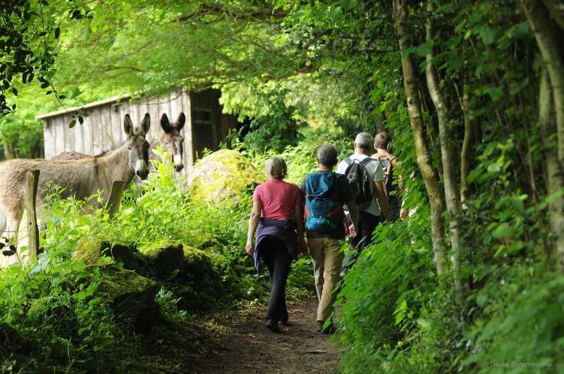 Randonneurs chemins des ânes observent les randonneurs
