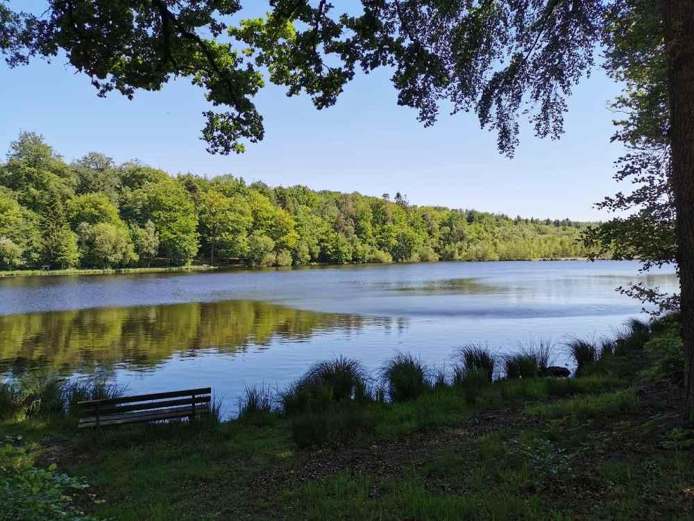 Banc le long de l'étang de la forêt au grais